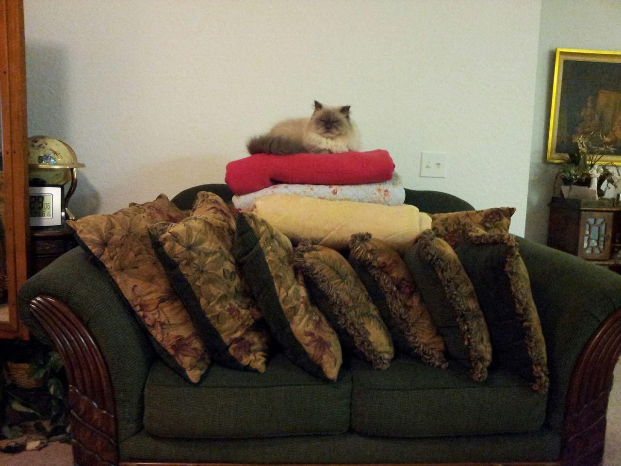 domestic cat, pets, domestic animals, animal themes, one animal, mammal, indoors, cat, feline, sofa, no people, home interior, sitting, stuffed, day