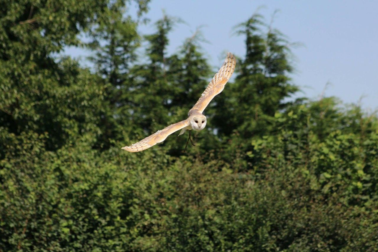 Beautiful stock photos of owl, Animal Behavior, Animal Themes, Animals In The Wild, Bird