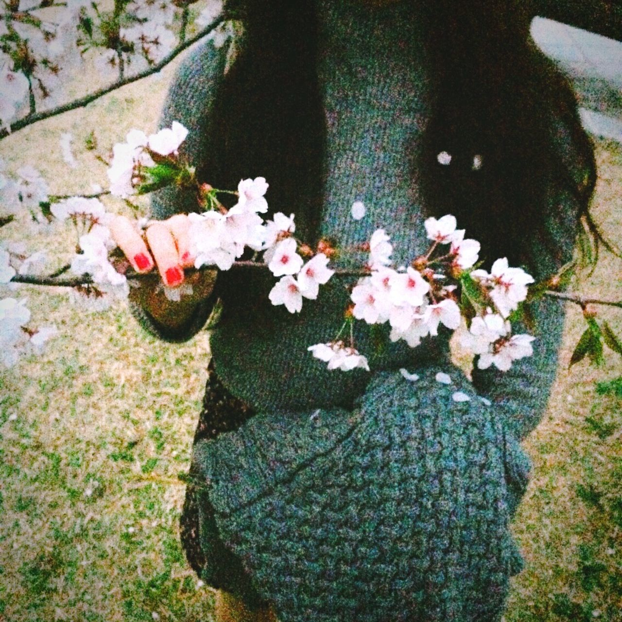 벚꽃 봄 Cherry Blossoms Spring Flowers Girl Beautiful Shot 일산 호수공원 South Korea Lake Park Ilsan Lake Park