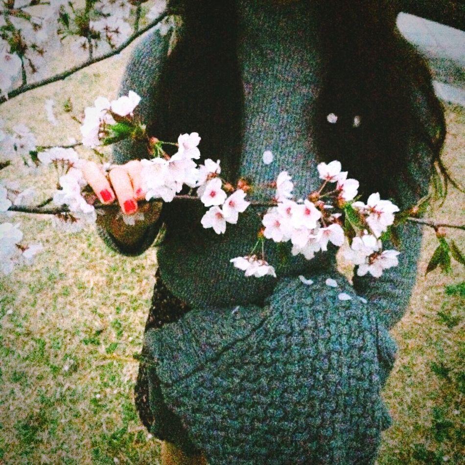 벚꽃 봄 Cherry Blossoms Spring Flowers Girl Beautiful Shot 일산 호수공원 South Korea Lake Park Ilsan Lake Park