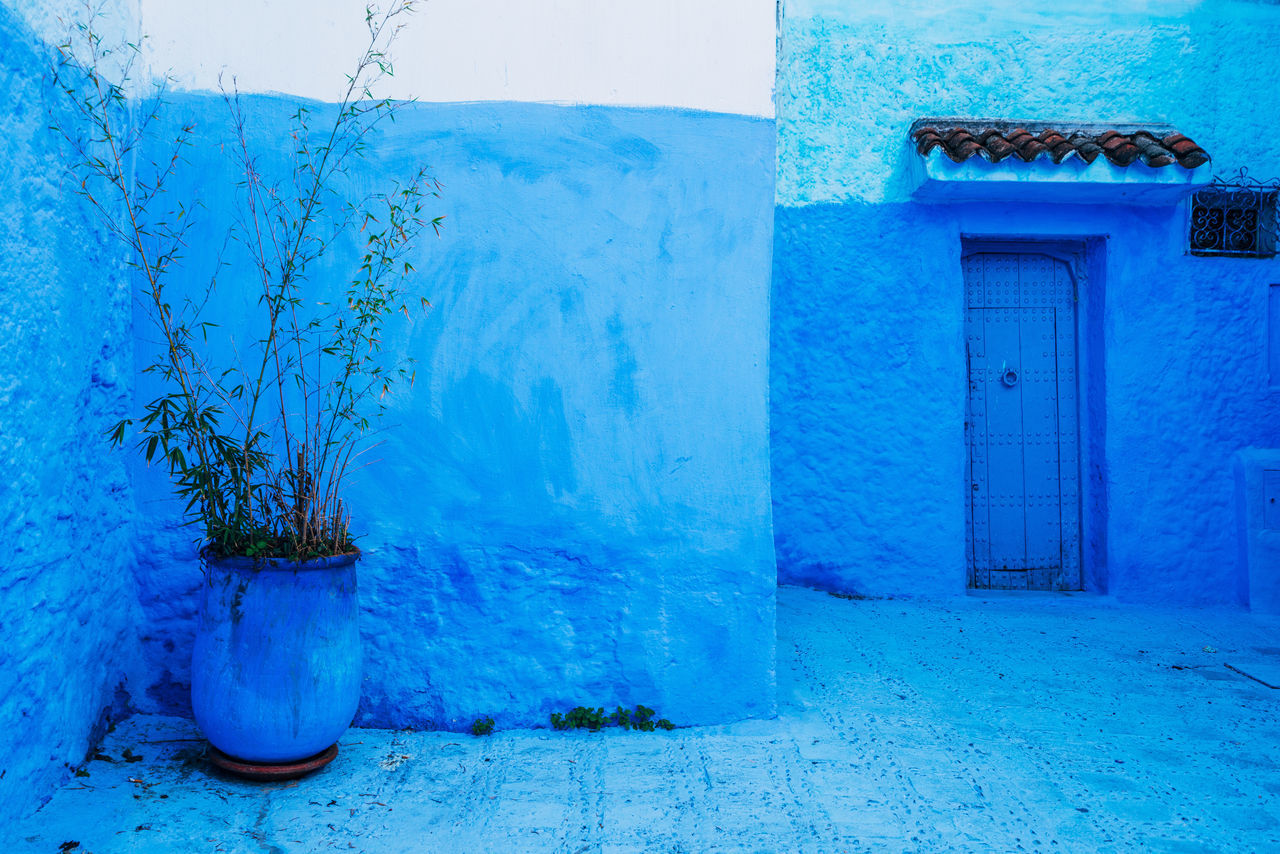 Architecture Blue Building Exterior Built Structure Close-up Day House Nature No People Outdoors Plant