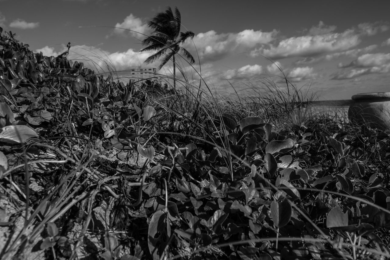 Release Agriculture Beach Life Beach Photography Beauty In Nature Blackandwhite Photography Cloud - Sky Day Field Fujifilm_xseries Growth Landscape Nature No People Outdoors Photographyisthemuse Plant Rural Scene Scenics Sky Tranquil Scene Tranquility Tree