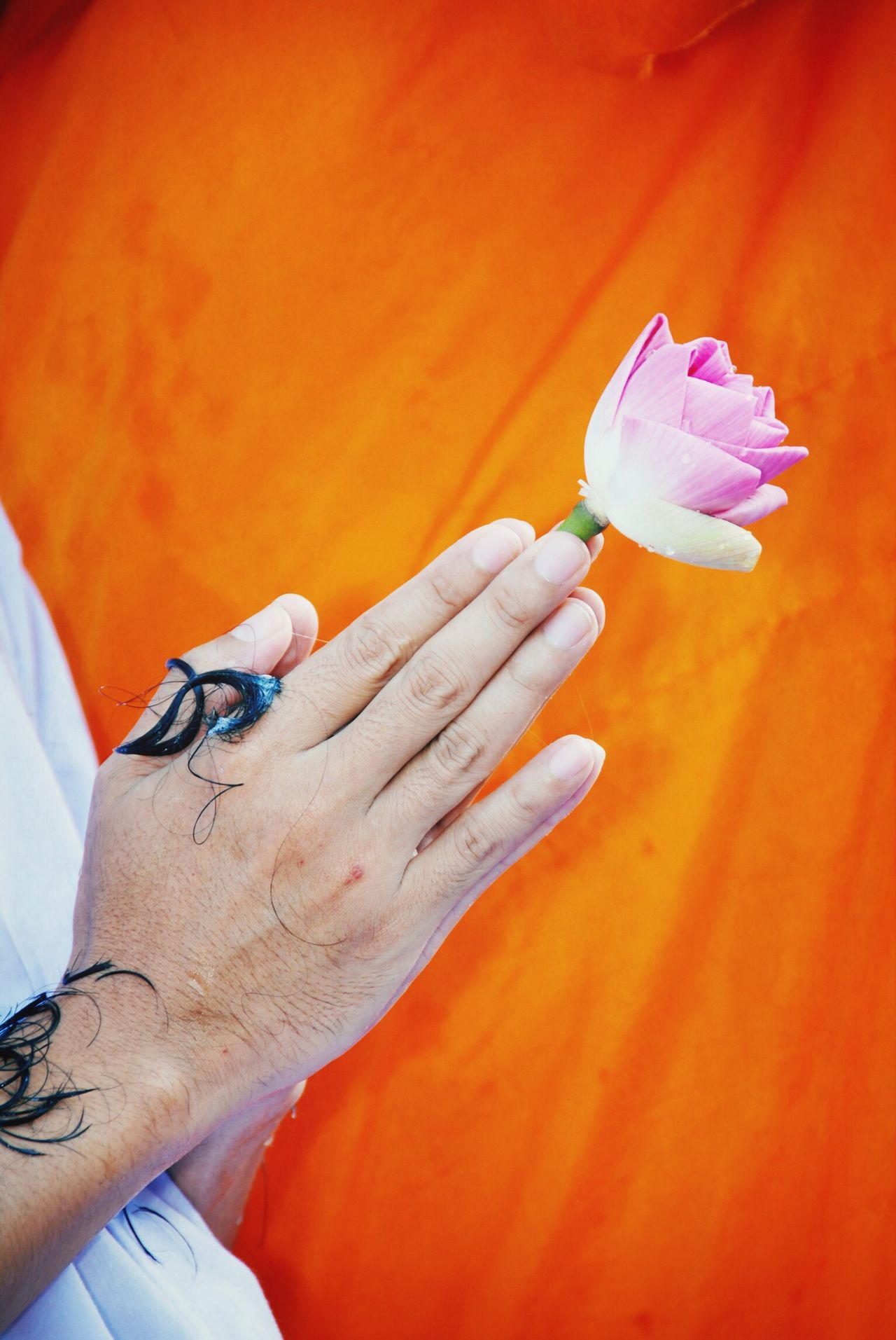 Beautiful stock photos of prayer, Belief, Flower, Flower Head, Gesturing