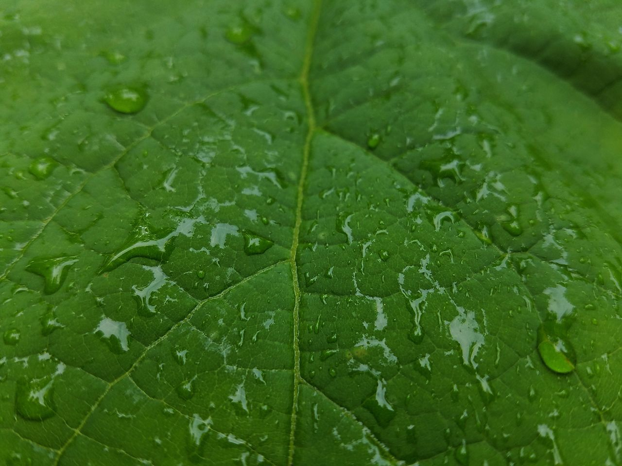 Green Leaf Green Color Drop Nature Water EyeEm Best Shots EyeEm Getting Inspired Android Photography Samsung Galaxy S7 Edge Pattern