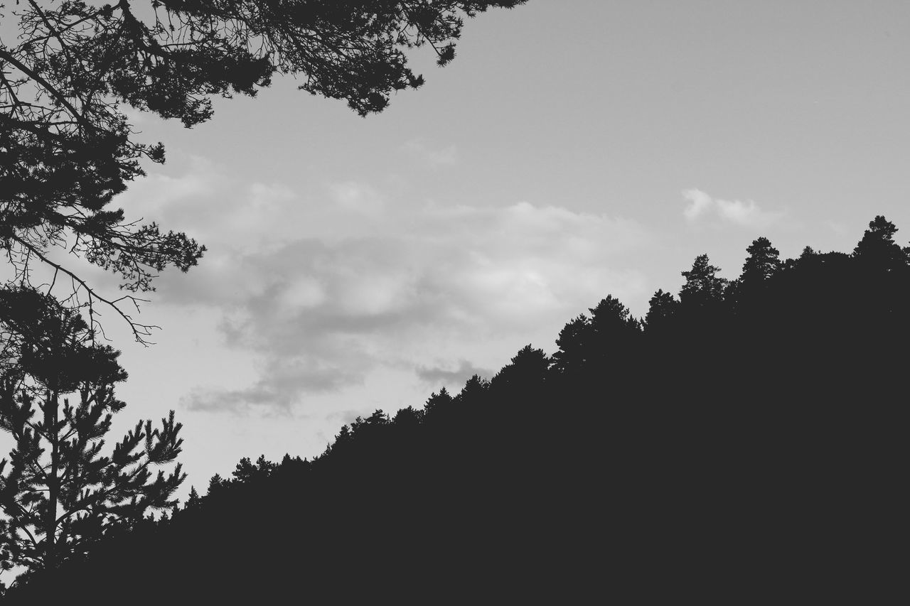 EyeEm Selects EyeEmNewHere Tree Silhouette Sky Low Angle View Nature No People Day Outdoors Beauty In Nature Growth Scenics