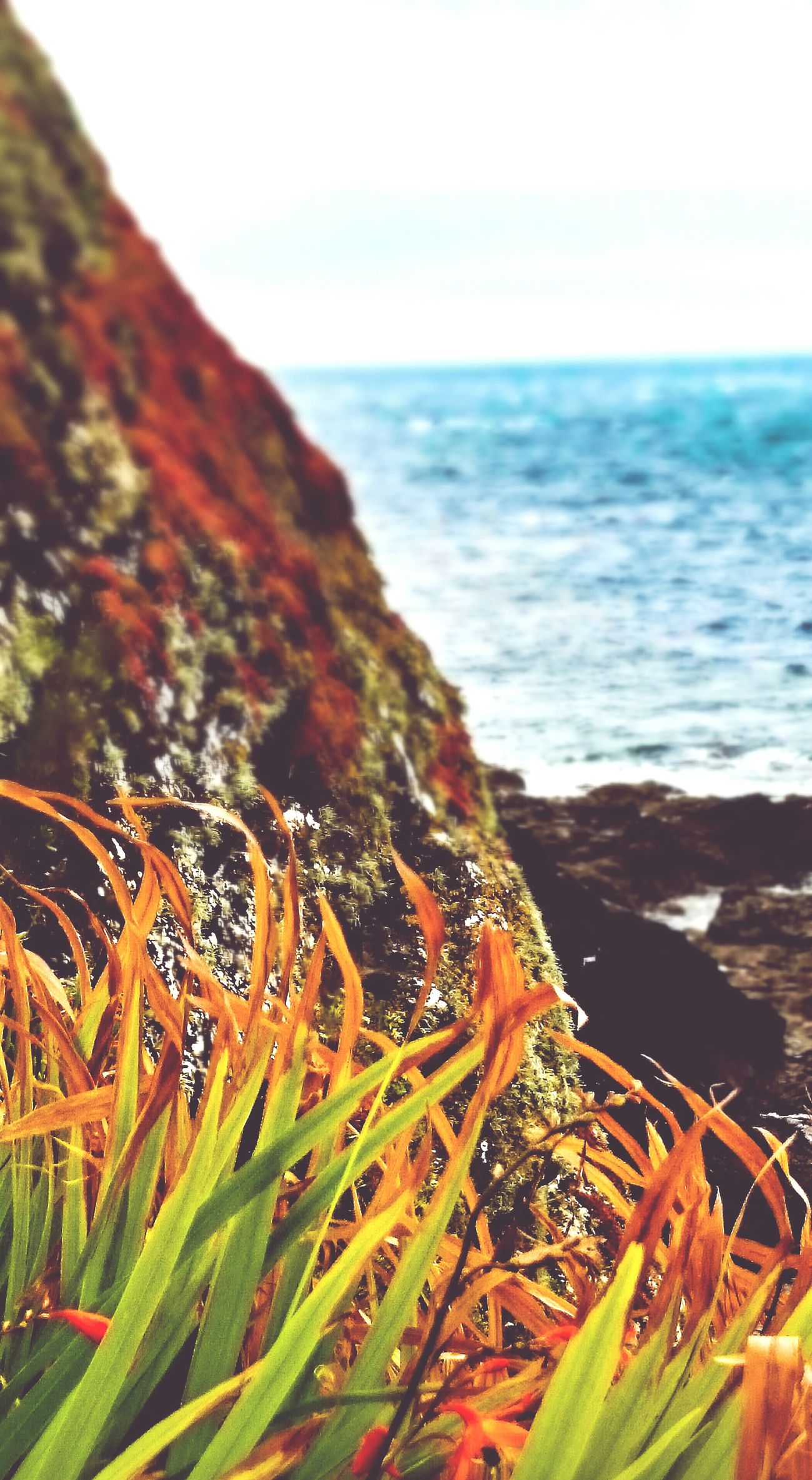 Clifftop Seascape Bird's-eye view Coastal Cliffs Cornwall Sea Beauty In Nature Water Horizon Over Water Nature Scenics No People Outdoors Day Taking Photos RuggedCornwall Views Horizons Cliff Cliffs And Sea Cliffs And Water Cliff And Blue Sea Cliffview