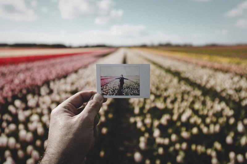 EyeEm Selects Keukenhof Netherlands Tulips