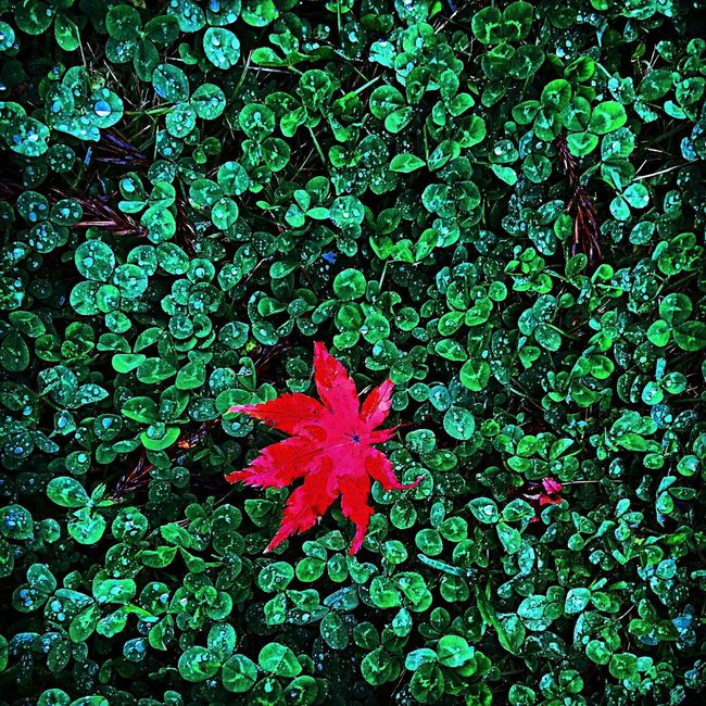 Rainy Days Green And Red Leaves
