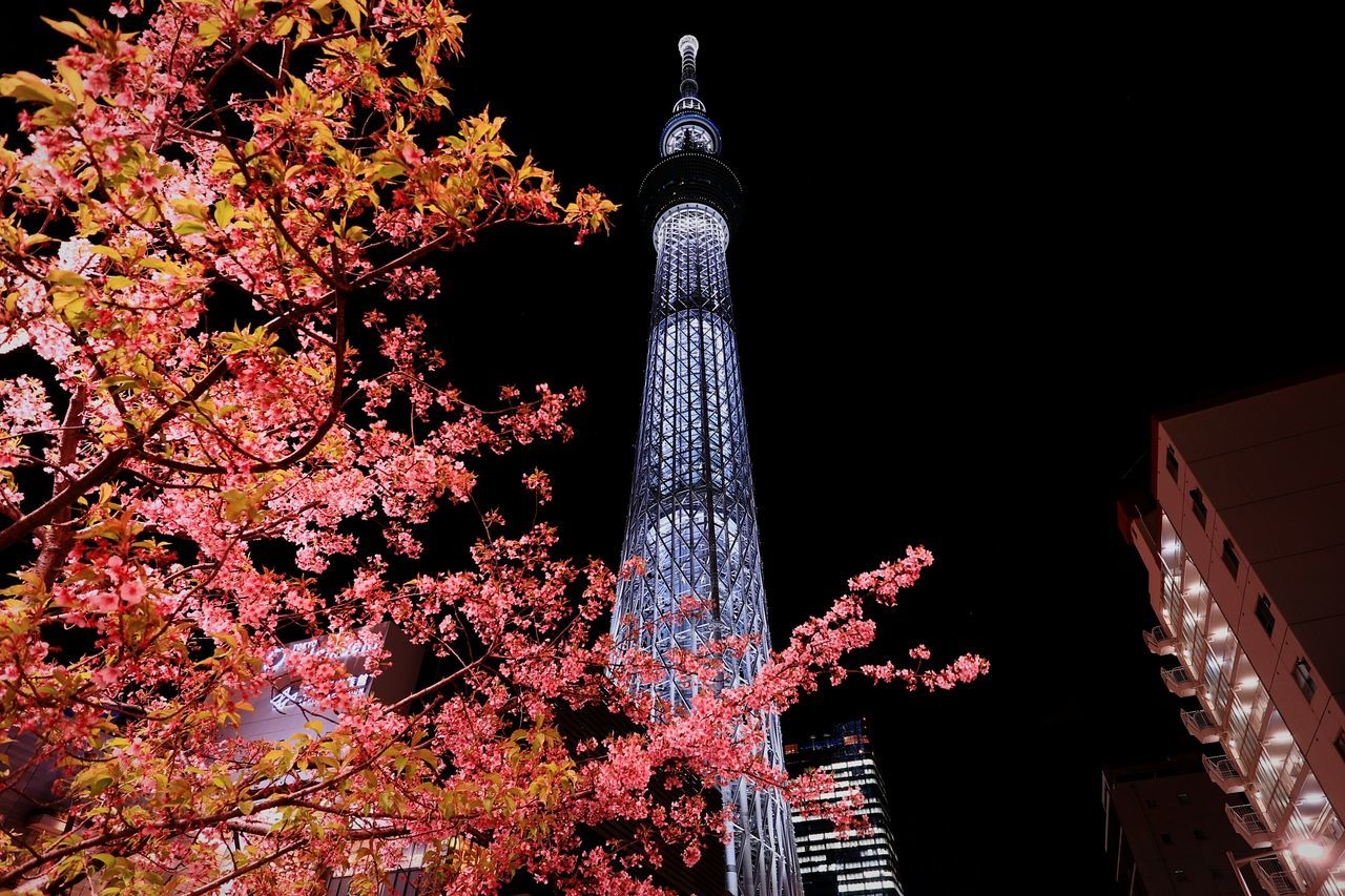 Landscape Urban Landscape Skytree Tokyoskytree Tokyo Japan Illuminated Nightphotography Nightscape Nightview Tower Tall - High Lights Blossoms  Cherry Blossom Flowers Flower