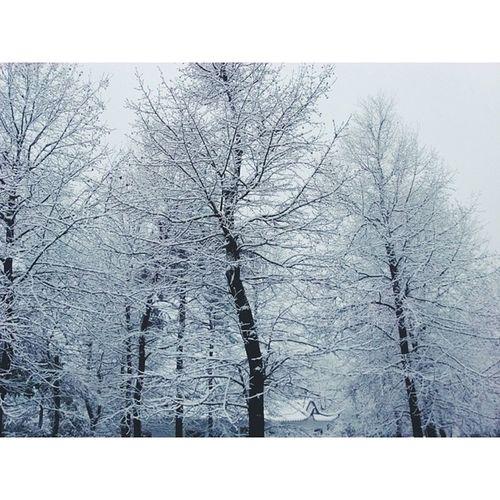 岳麓山 长沙 雪 Snow vscocam vsco changsha hunan china 湖南