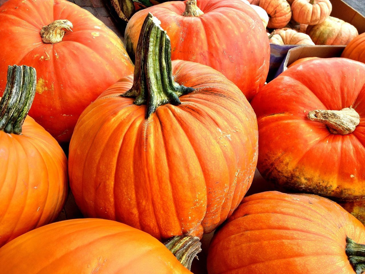 Beautiful stock photos of pumpkin, Backgrounds, Close-Up, Detail, Food And Drink