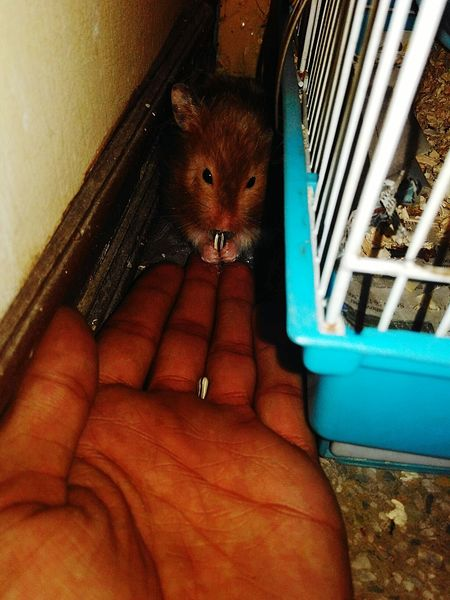 Long Goodbye Hamster One Person Domestic Animals Mammal Hamster Love Methhisname
