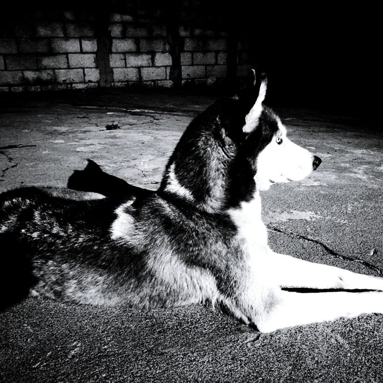 Eslasha Husky Huskyphotography Husky Love Husky ♡ Huskygram Huskylife Huskylovers Photography Photograph Photos That Will Restore Your Faith In Humanity Photographylovers Photooftheday Photographer Photography Is My Escape From Reality!