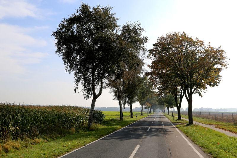Landscape Landstrasse Norddeutschland Freie Fahrt Wandern Mais Maisfeld Landwirtschaft Kreisstadt Kreisstraße Driving Around Driving Home Allee Allee Der Kosmonauten Allee Of Love