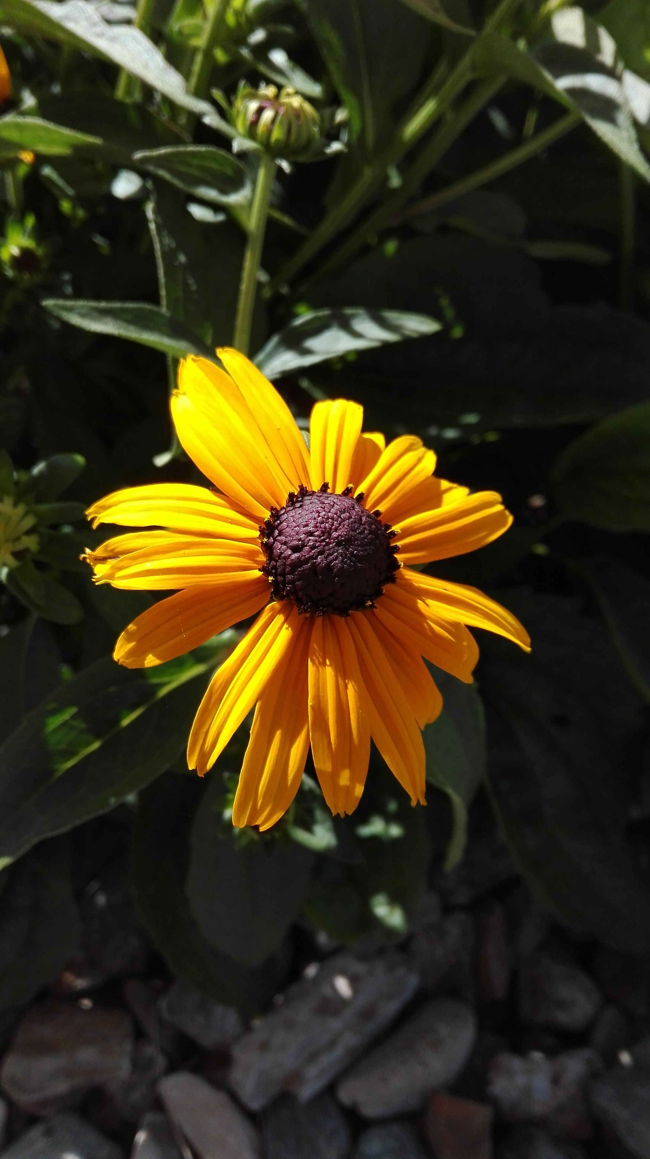 flower, petal, flower head, yellow, fragility, freshness, pollen, close-up, beauty in nature, blooming, growth, nature, focus on foreground, plant, in bloom, daisy, day, outdoors, no people, stamen, blossom, botany, selective focus