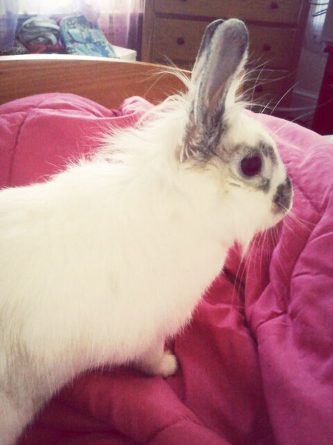 My Rabbit So Addorable.....<3