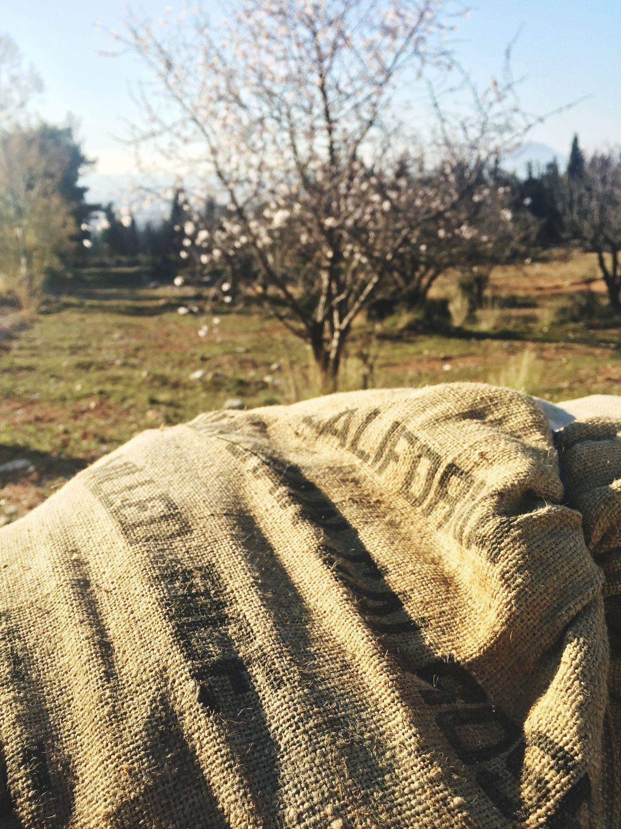 Almond Tree Sandbags