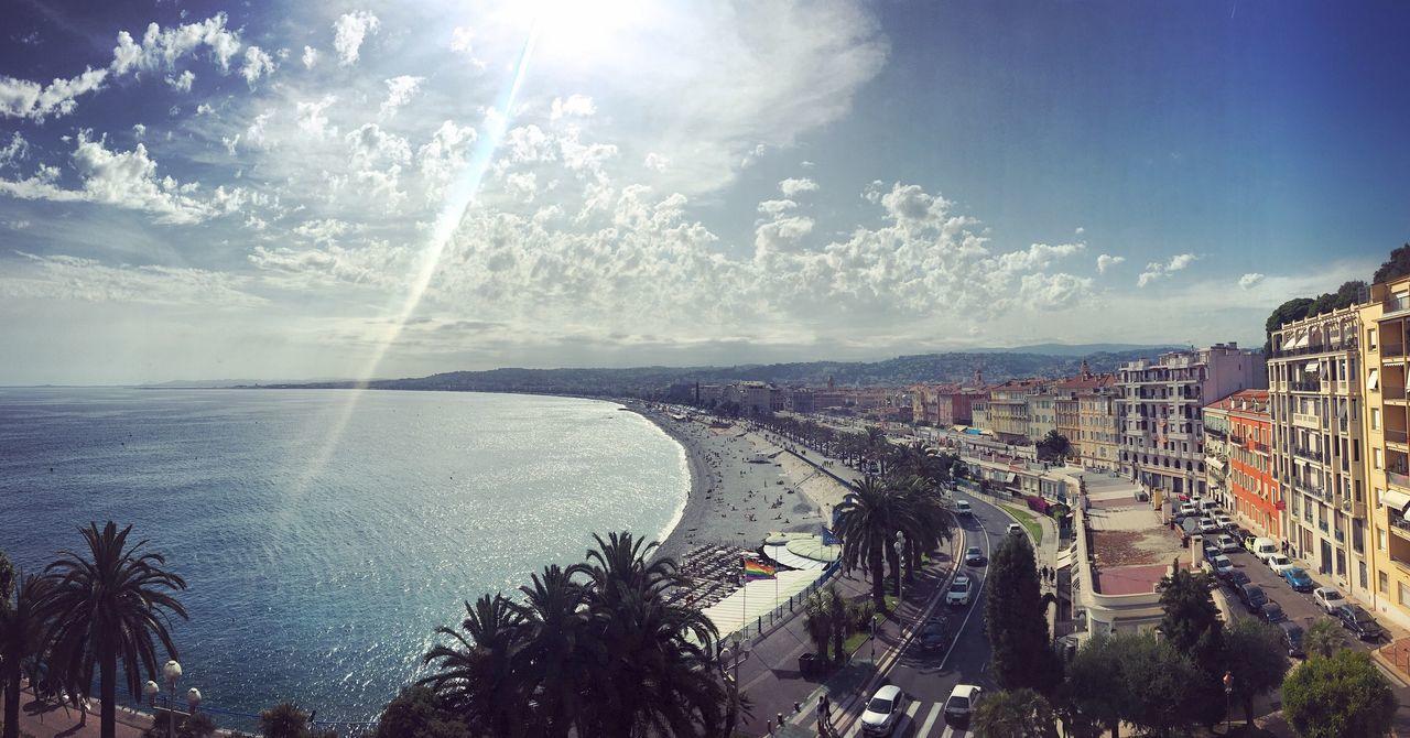 Palmen Mediterranean  Palm Trees South Of France Midi France Coldplay Concert  Côte D'Azur Nizza Nice