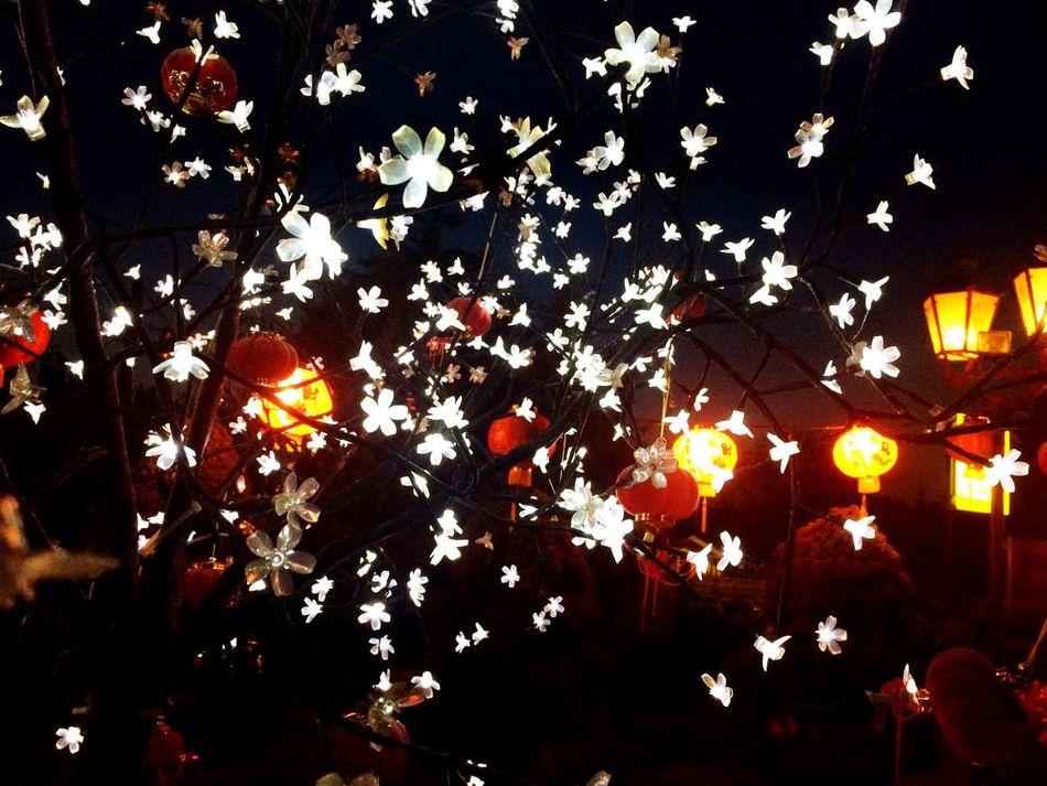 Beautiful stock photos of fairy, Backgrounds, Berlin, Branch, Celebration