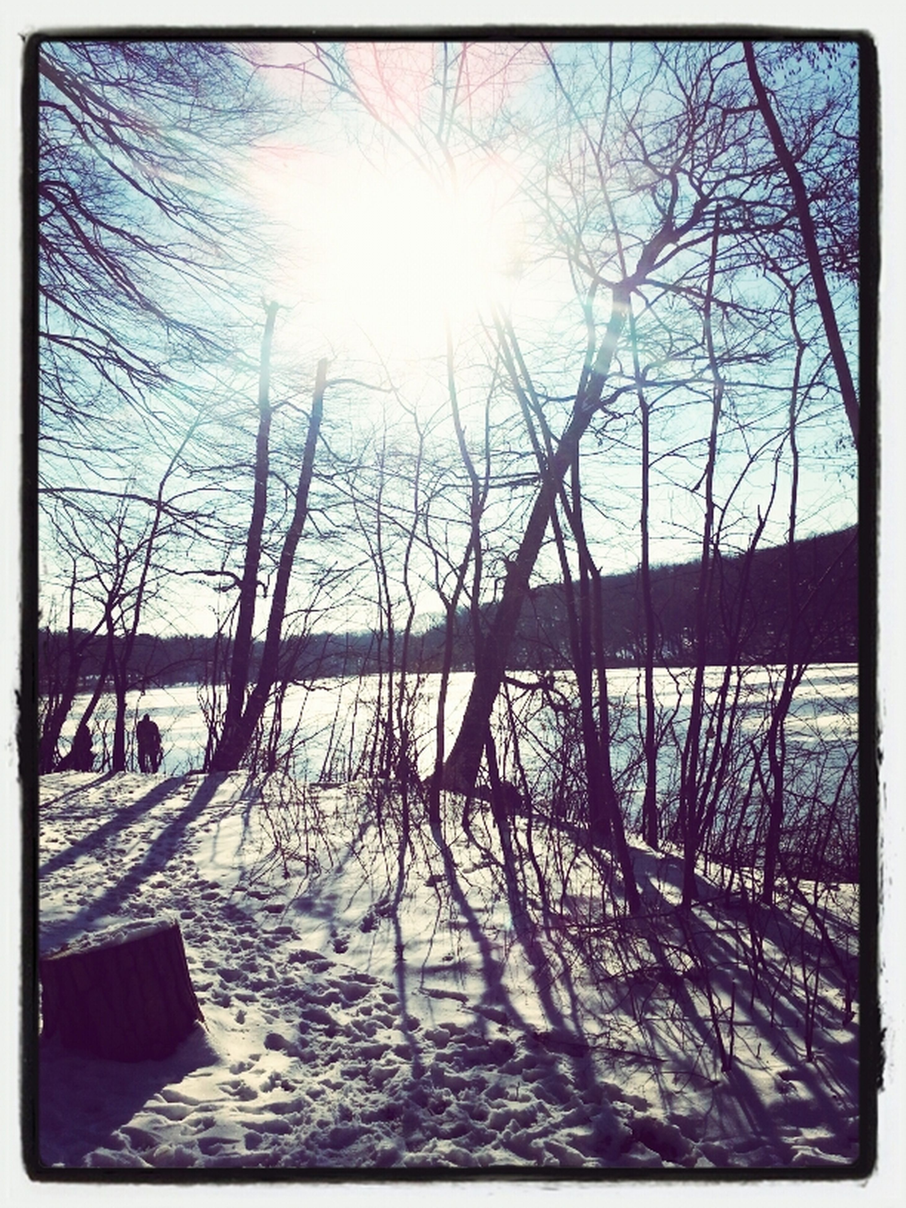 transfer print, water, sun, bare tree, auto post production filter, sunlight, tree, tranquility, tranquil scene, nature, branch, scenics, beauty in nature, sky, reflection, lake, snow, winter, sunbeam, cold temperature