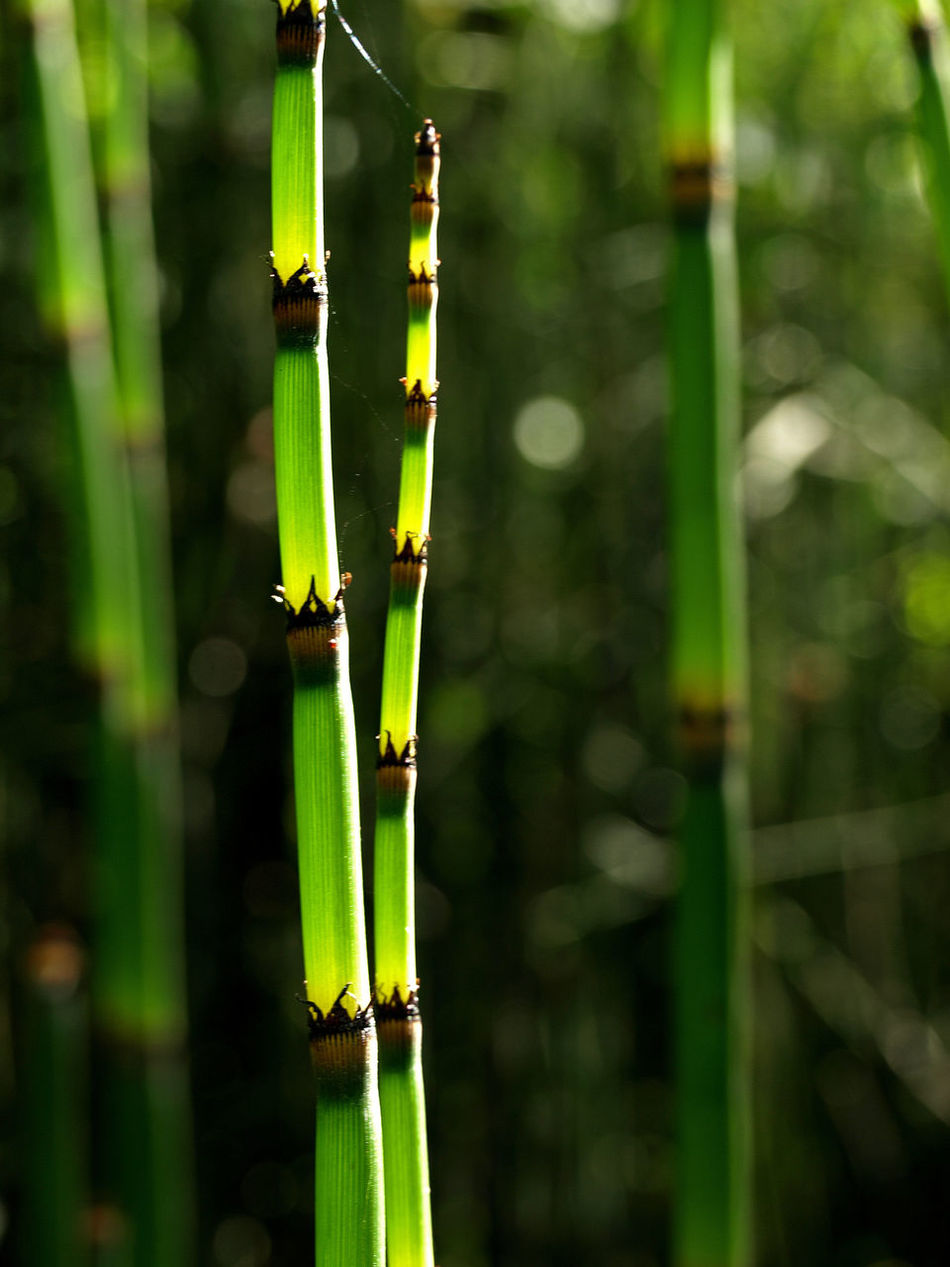 BambooKitchenNZ Grass Jedediah Smith Redwood State Park Nature Nature_collection Reeds