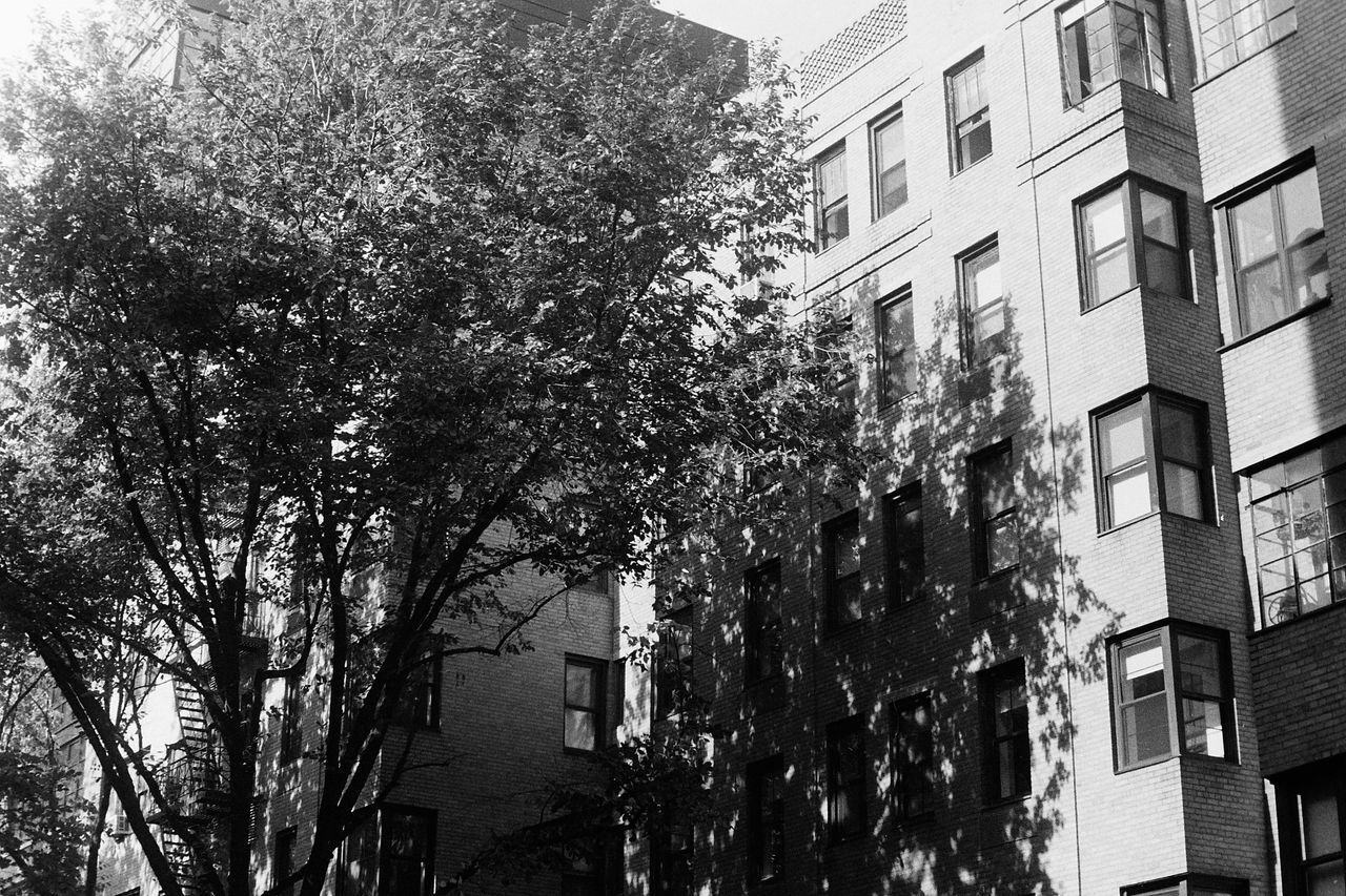 building exterior, architecture, built structure, window, low angle view, tree, city, residential building, no people, apartment, outdoors, day, modern, sky