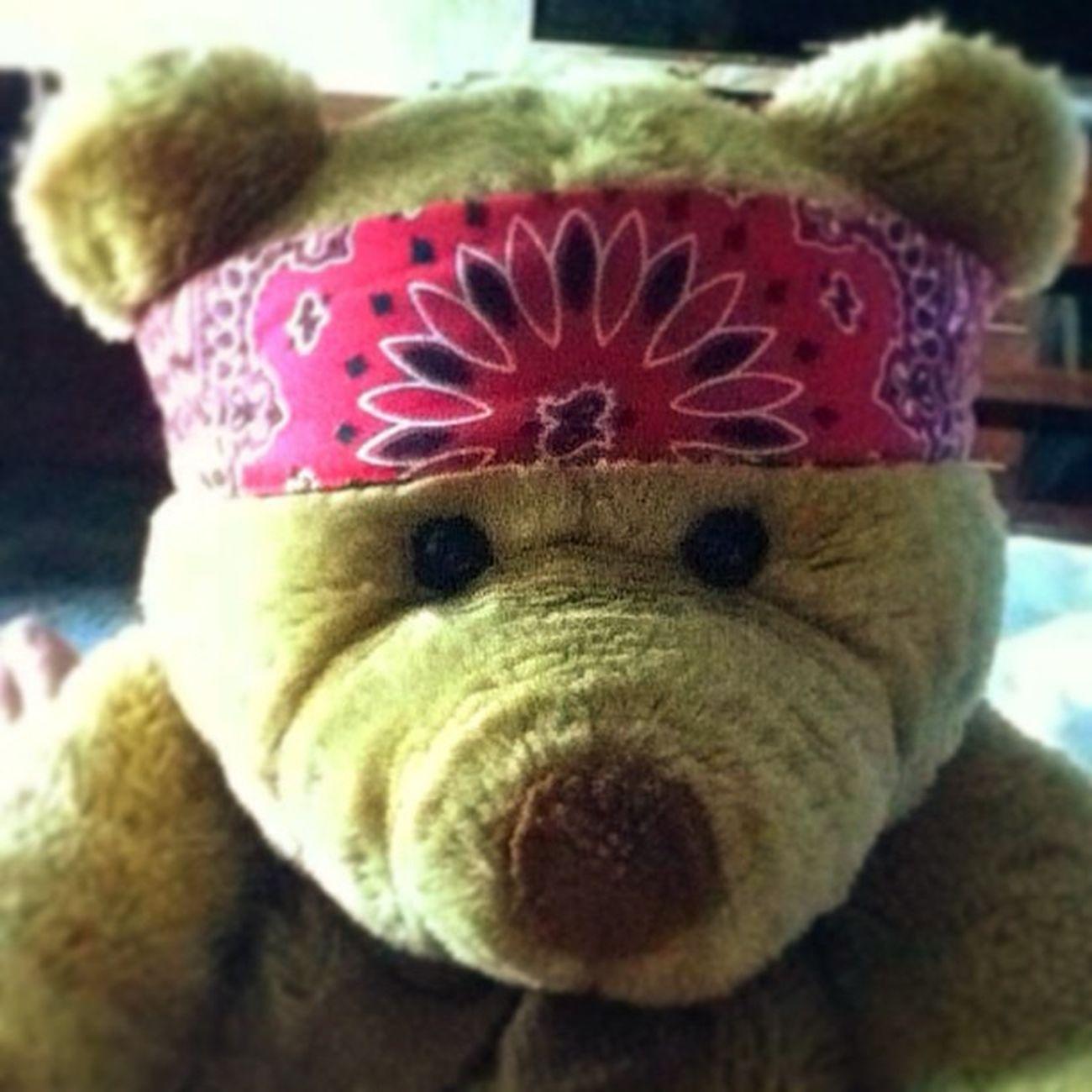 bearontour #bear #travel #honktravel #teddybear #ontheroad Travel Bear Ontheroad Teddybear Honktravel