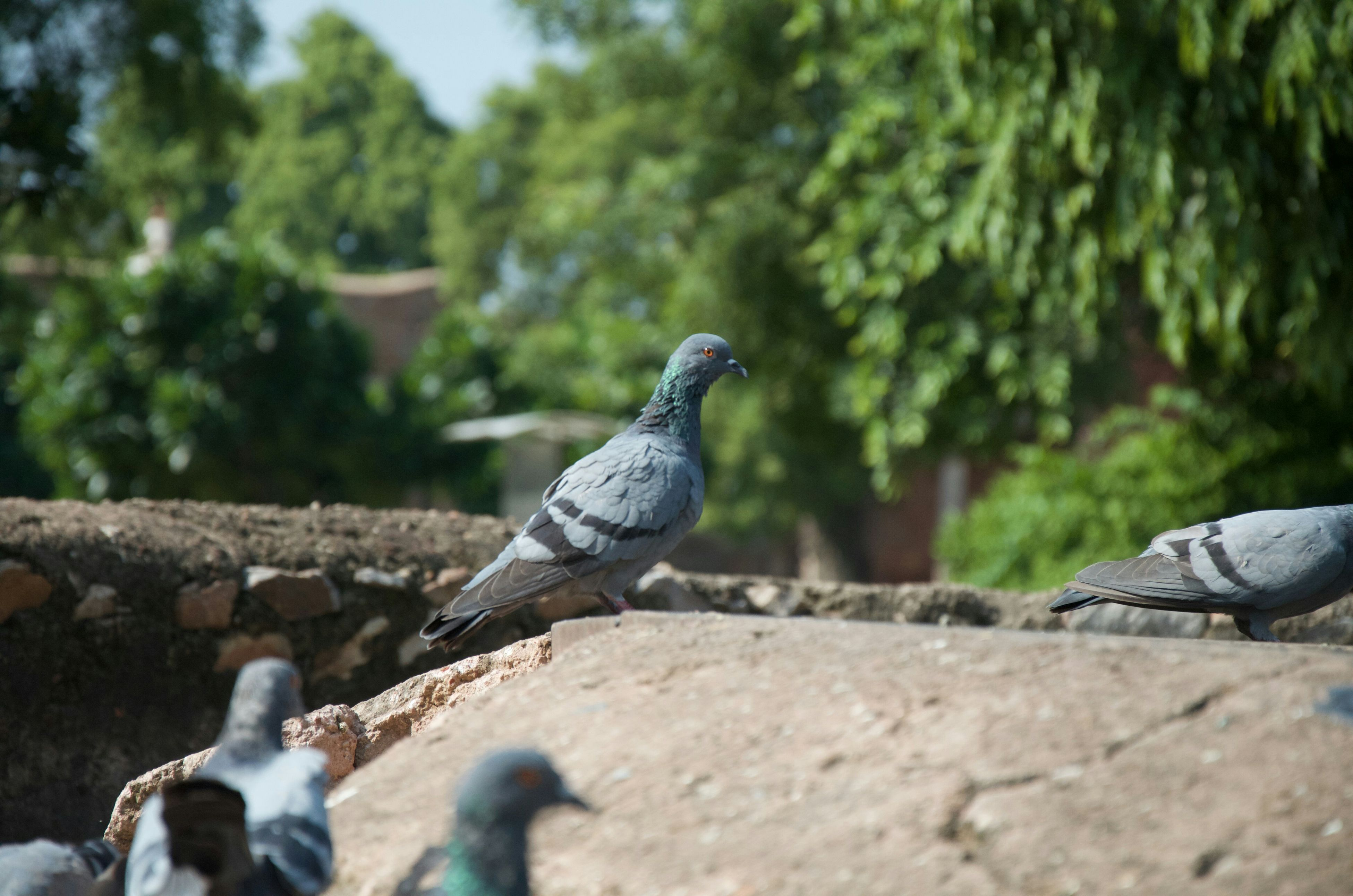 bird, animal themes, animals in the wild, one animal, wildlife, pigeon, perching, focus on foreground, full length, tree, selective focus, two animals, railing, day, outdoors, nature, retaining wall, close-up, side view, sparrow