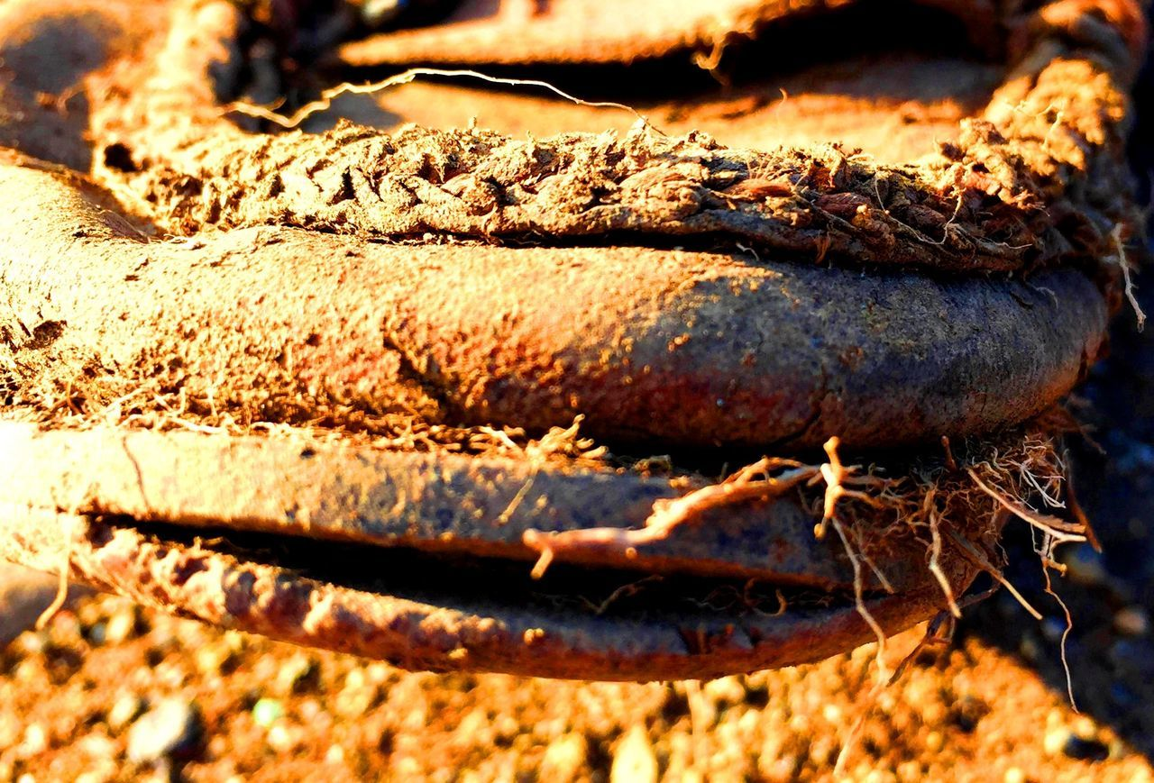 Branch Close-up Day Nature No People Old Shoes Outdoors Textured