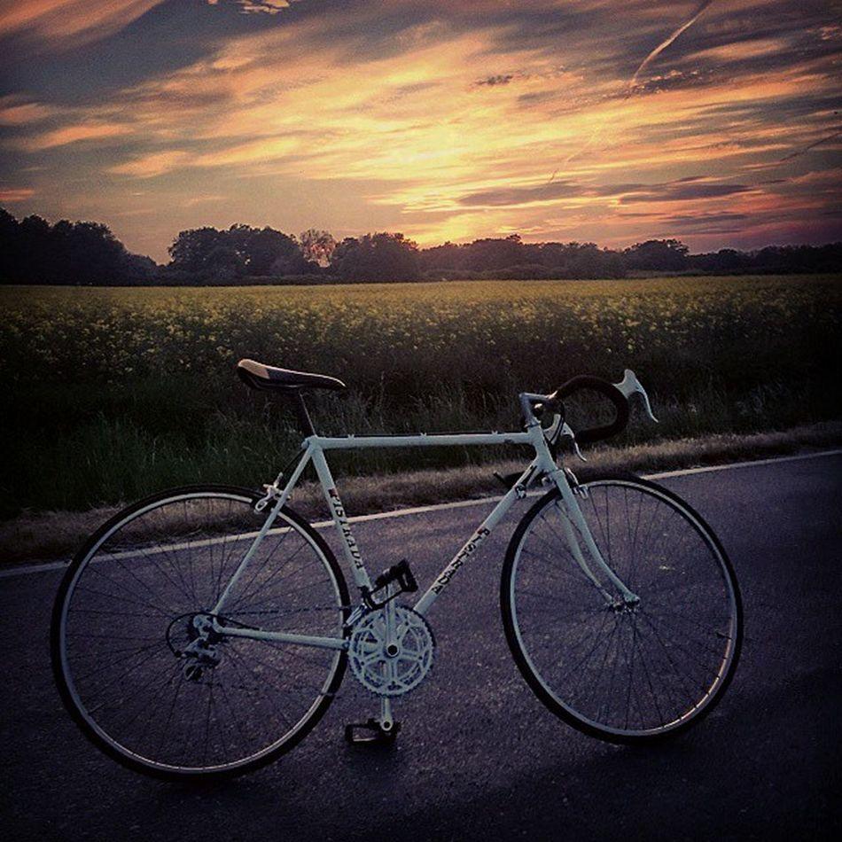 🚲Szosa Sunset Zachod Bike Rower Cycle Training Trening Rzepak Wroclawcyclechic