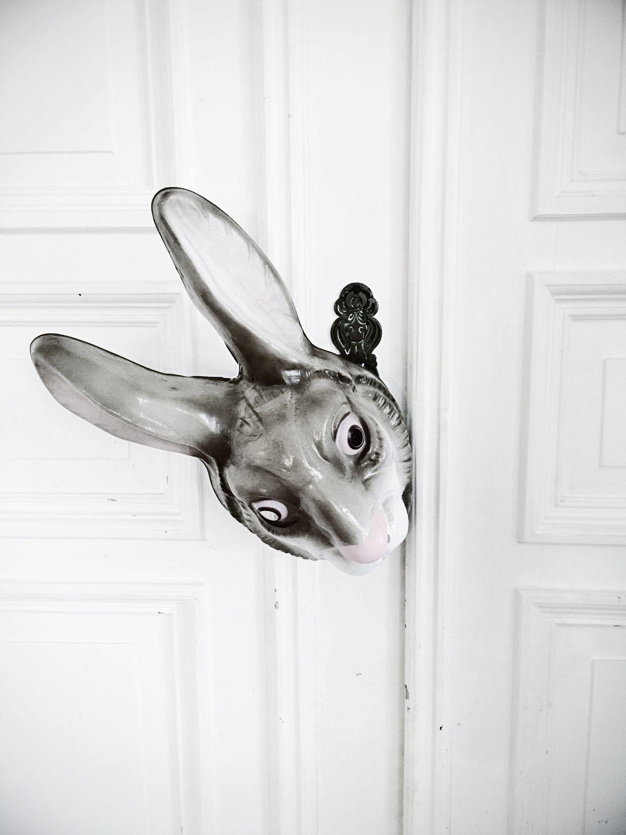 Bunny  Ostern Rabbit