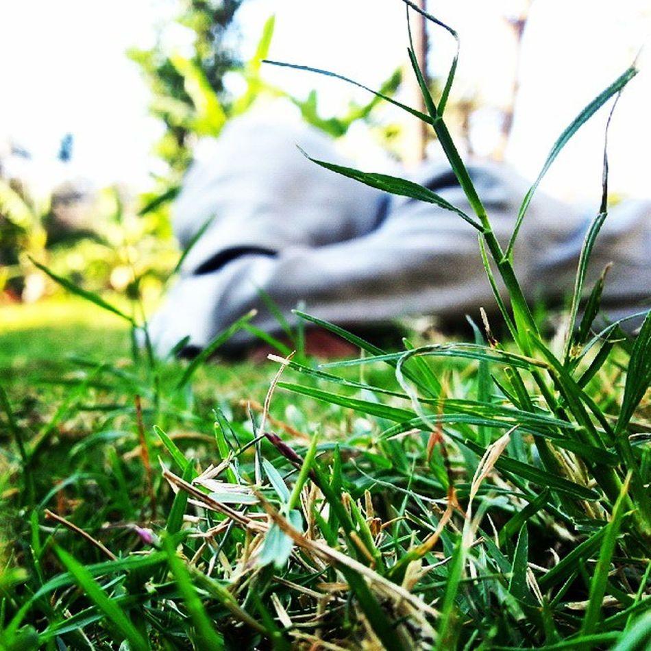 Enjoyd Alot Sunday Eveng Cousins  Chattin Under Coconut Tree N Grass AllAround😚