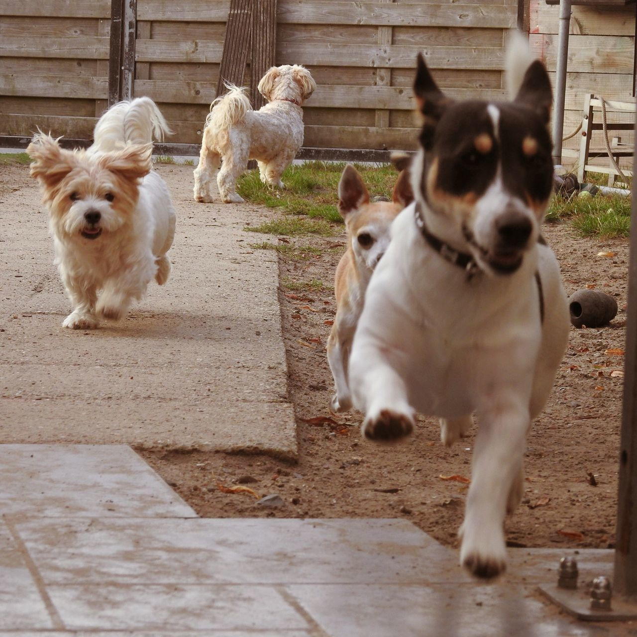 Dog Domestic Animals Pets Animal Themes Mammal Outdoors Day No People Portrait Togetherness Nature Lilymayparker.blogspot.be Lily May Collection Lily May Parker Dogs Dogs Of EyeEm Running running from the woegieman 🐾🐾🐾🐾🐾🐾 Nature