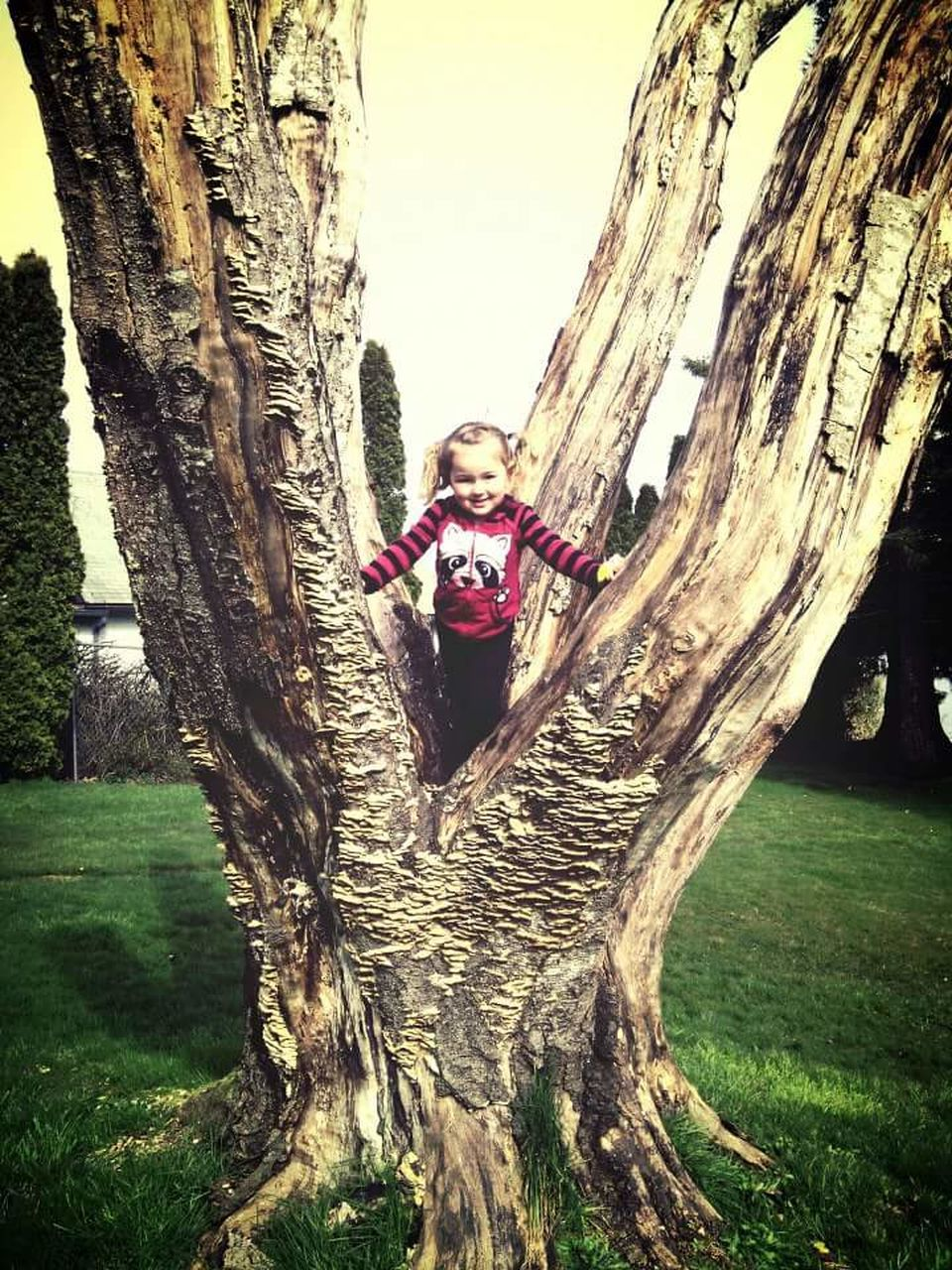 tree trunk, tree, leisure activity, real people, lifestyles, happiness, one person, full length, front view, smiling, looking at camera, casual clothing, hugging, day, childhood, young adult, nature, portrait, growth, young women, outdoors, rope swing, beauty in nature