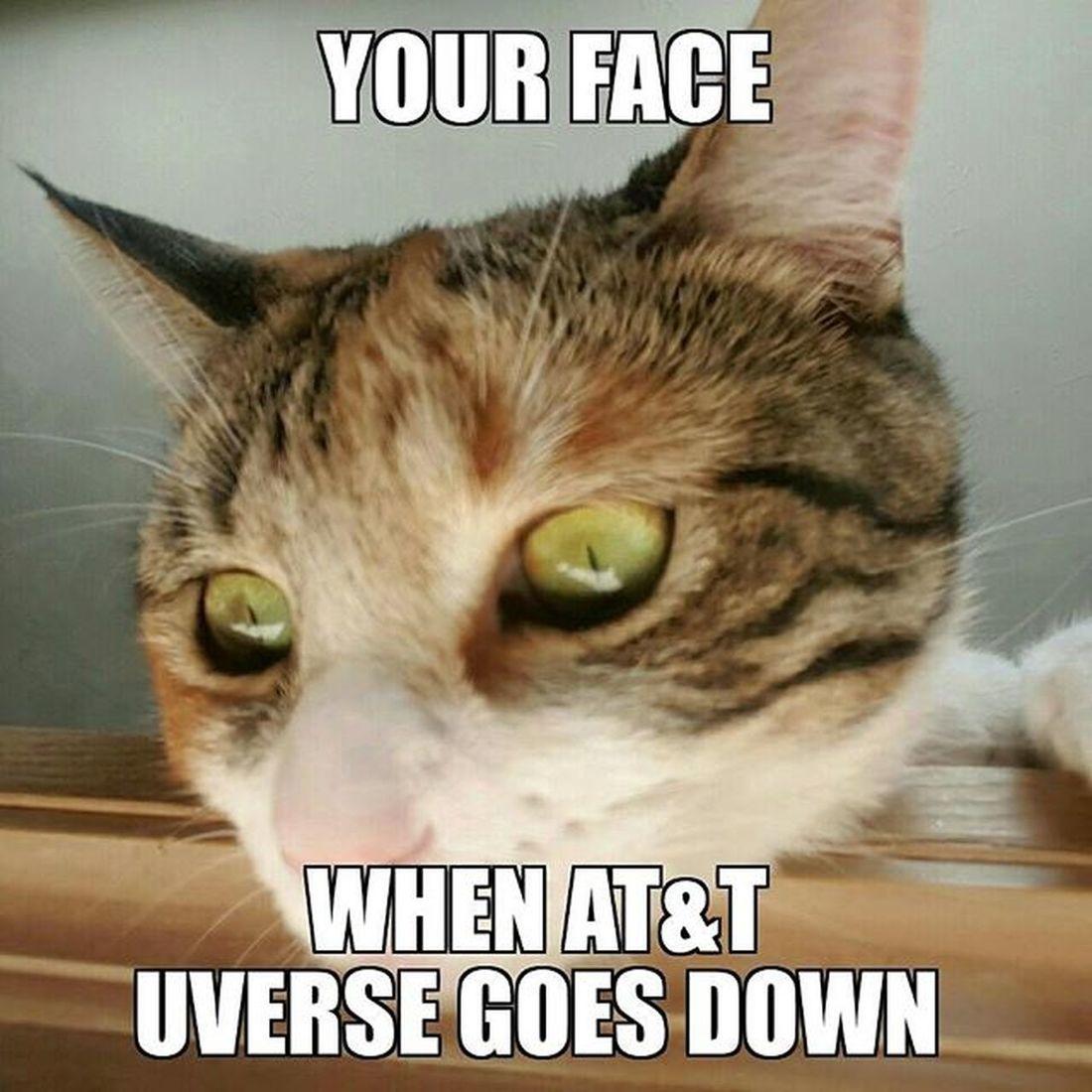 Att UVerse Catsofinstagram