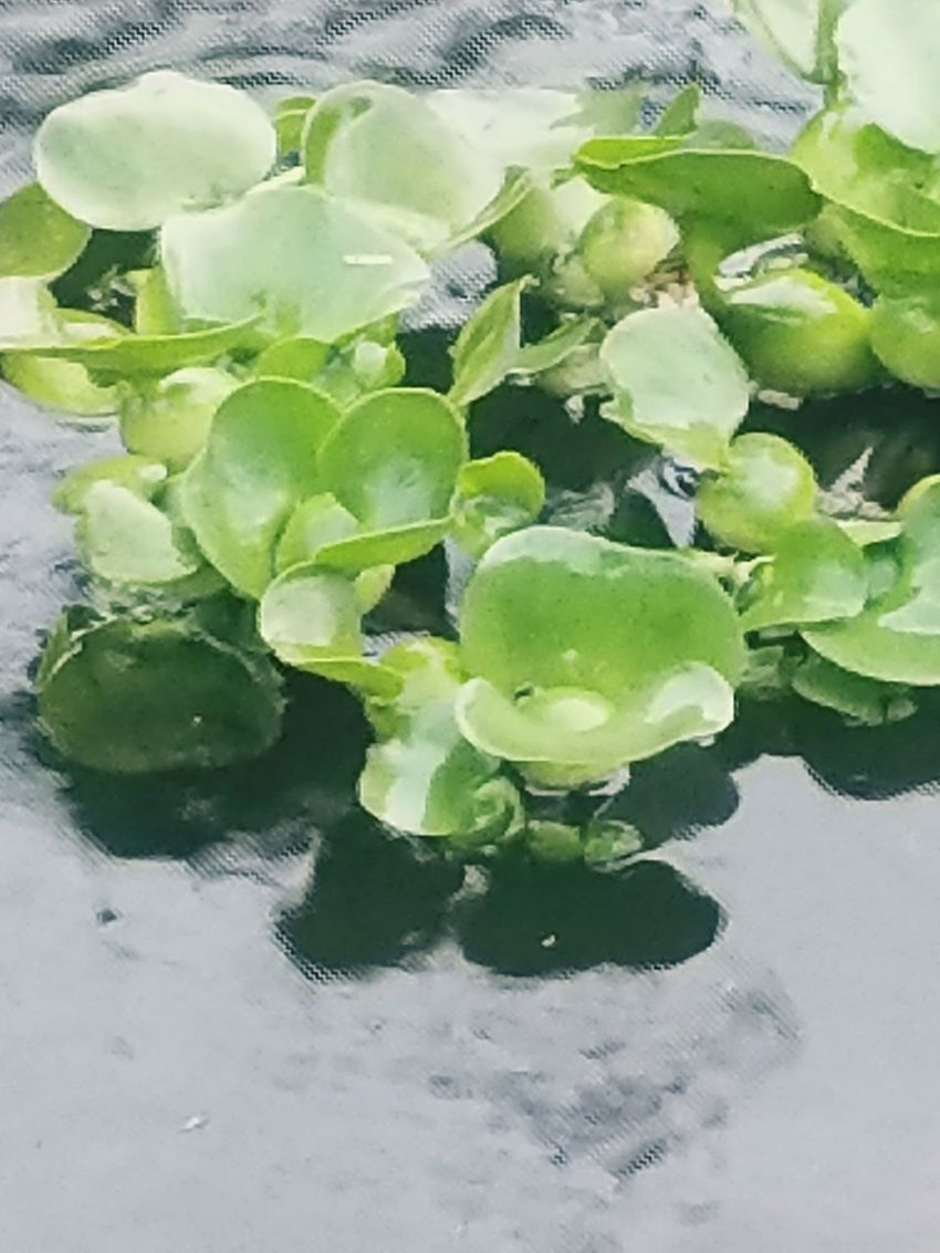 Our pond 3