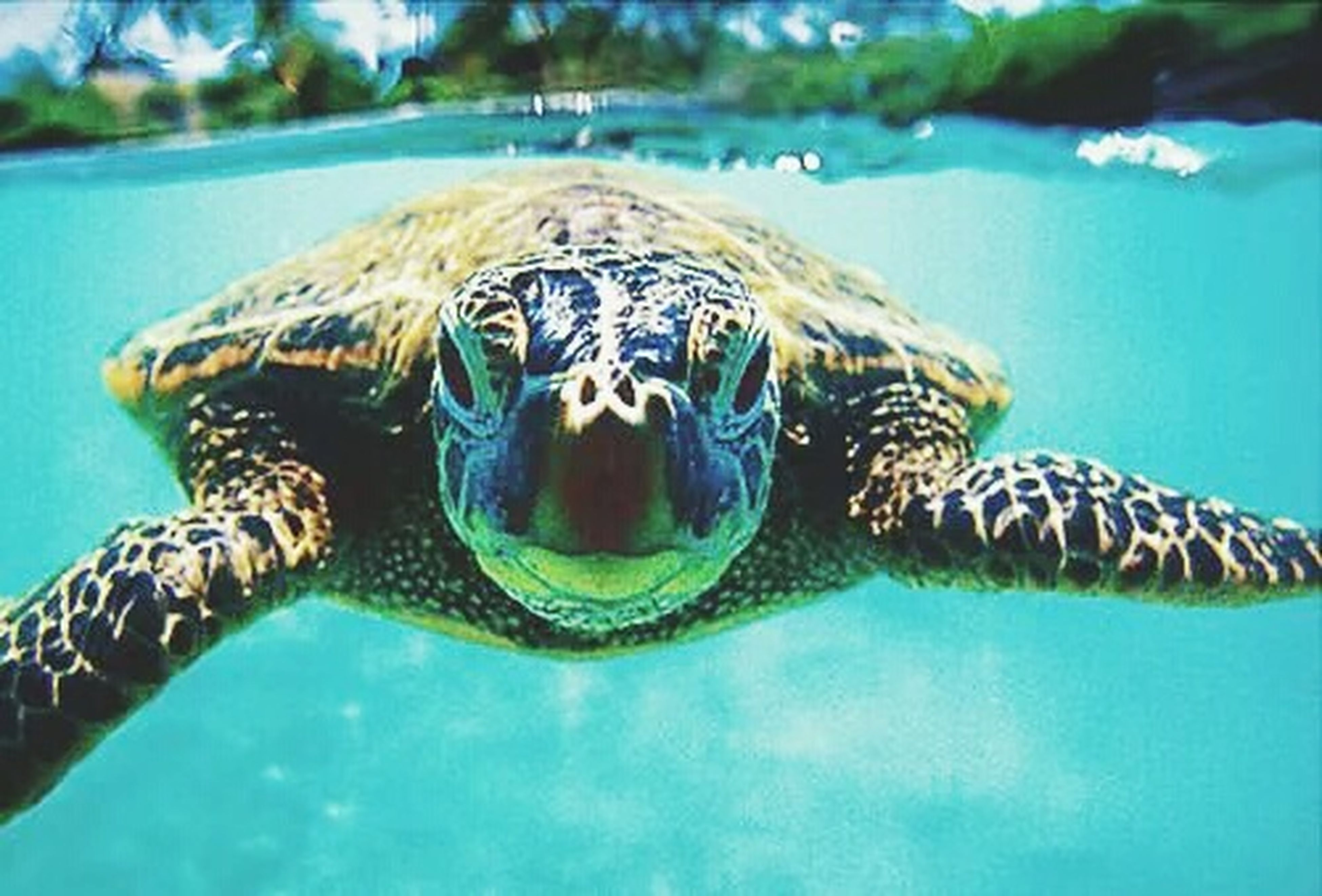 animal themes, animals in the wild, wildlife, swimming, one animal, water, underwater, blue, sea life, animals in captivity, fish, zoo, reptile, animal markings, close-up, undersea, turtle, zoology, nature, two animals