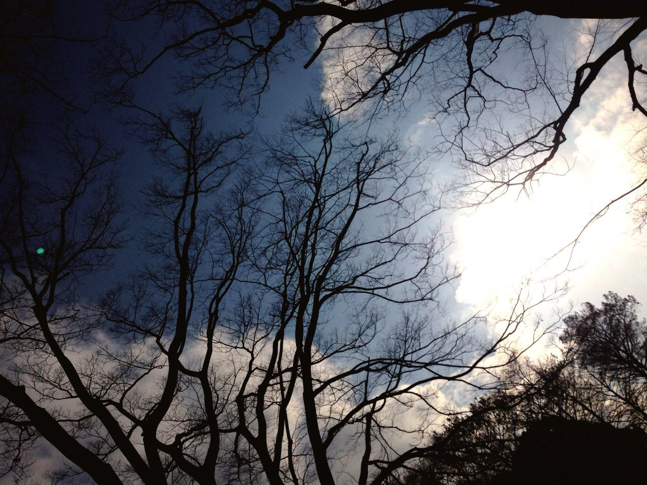 bare tree, tree, branch, nature, low angle view, outdoors, sky, no people, beauty in nature, day, silhouette, scenics