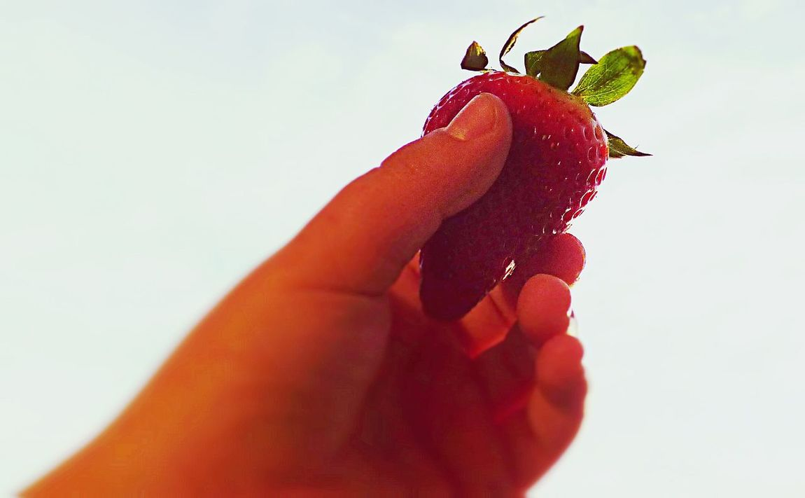 The Hand Holding Strawberries Hand Close Up Boy Hand Strawberry Strawberrie White Background BlurHolding Up... Green Red Food Antioxidant Healthy Eating Healthy Food My Son Hand Human Body Part Human Hand
