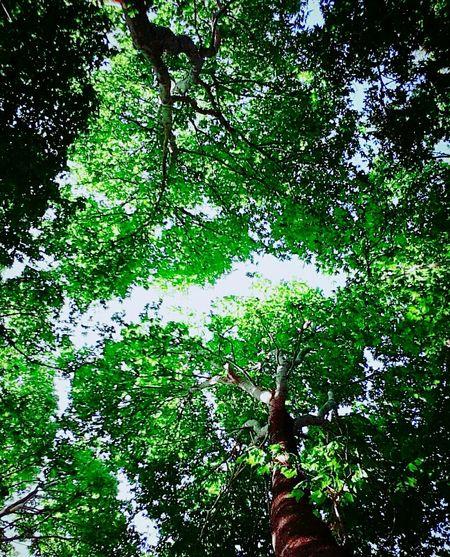 Green Sky Nature First Eyeem Photo Trees