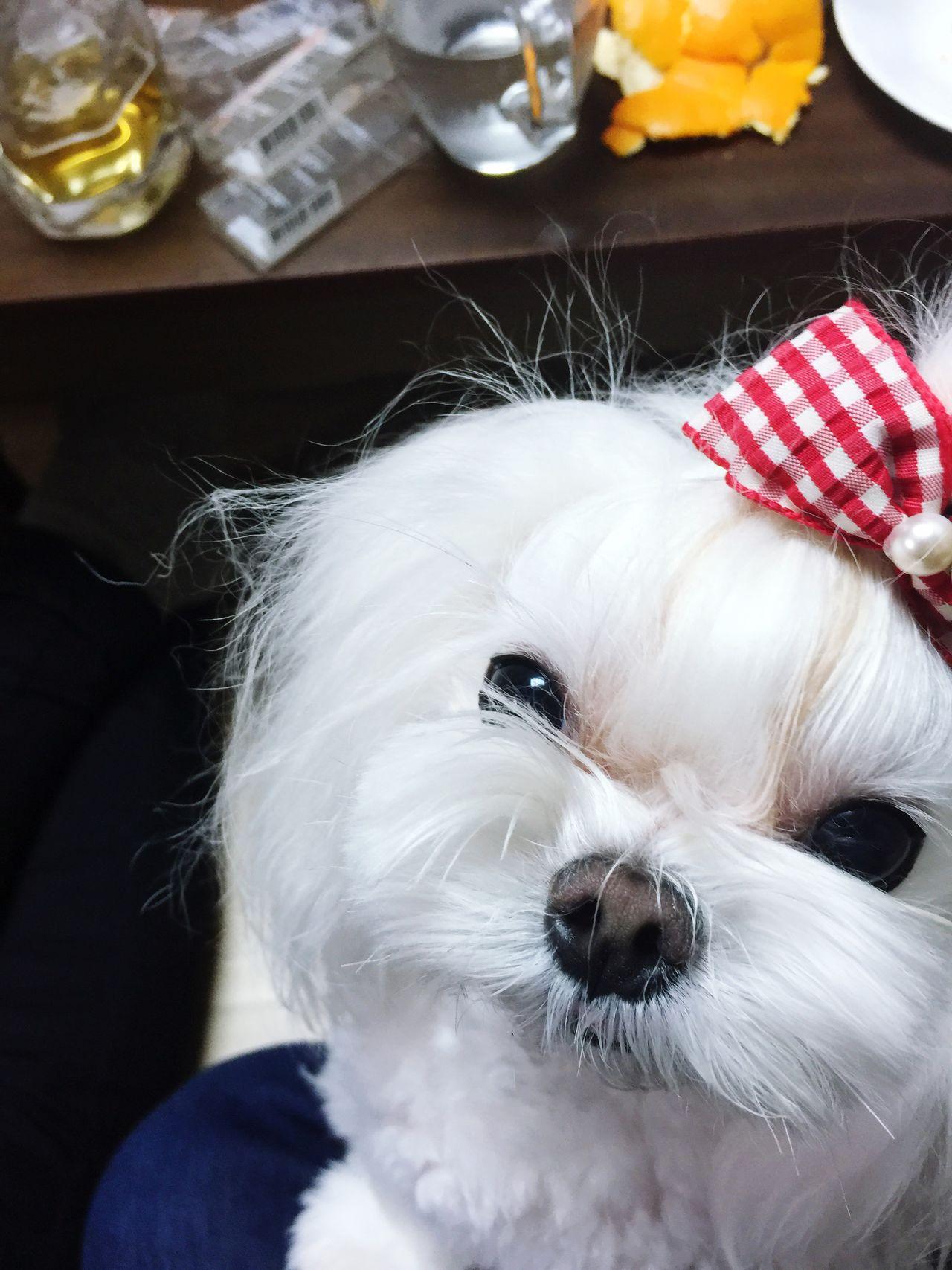 Beautiful stock photos of bow, Animal Eye, Animal Hair, Animal Head, Animal Nose
