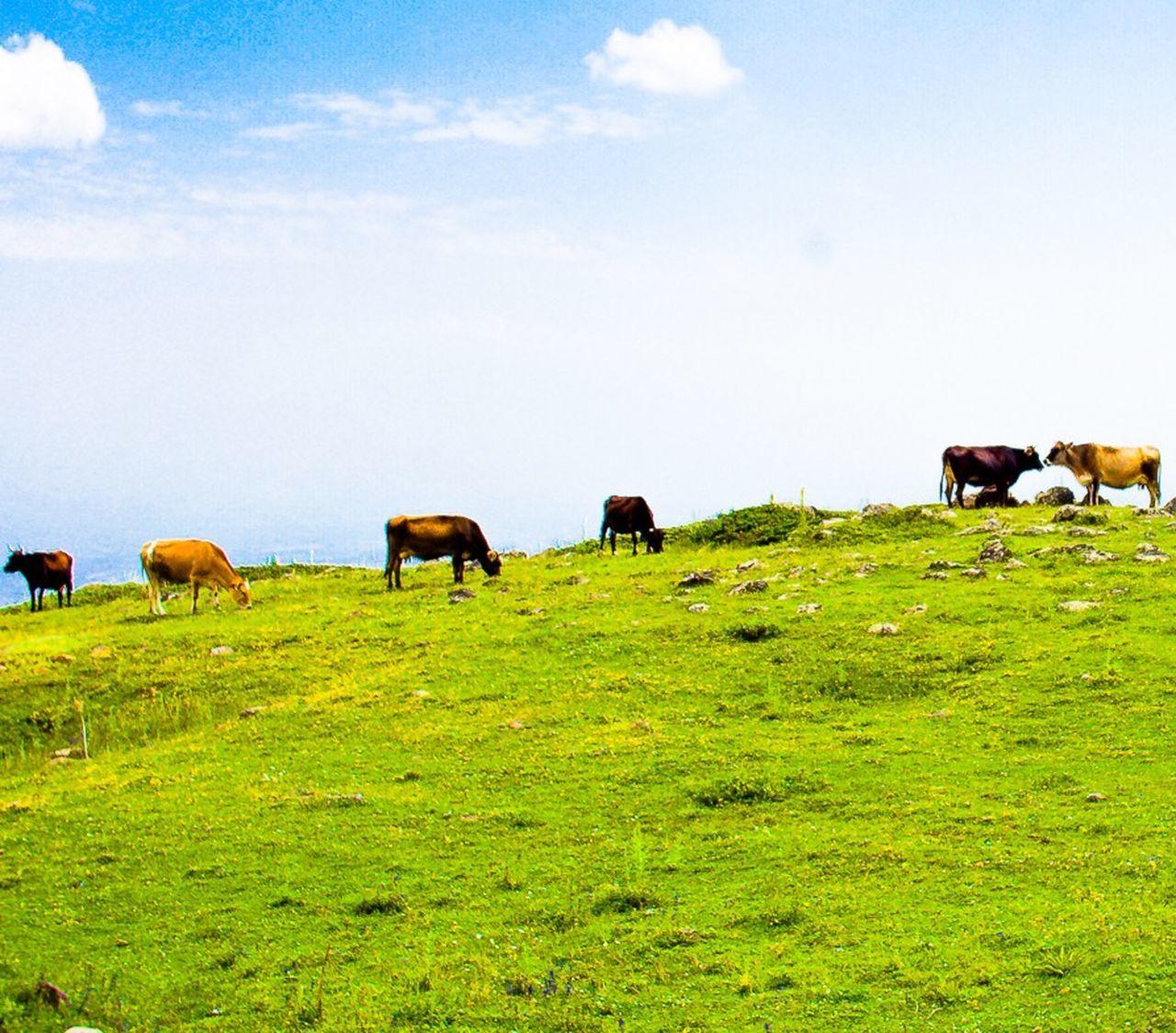 Cows I See Cows. Georgia Mountains And Sky Mountain View Georgia Tbilisi Beautiful Nature EyeEm Nature Lover
