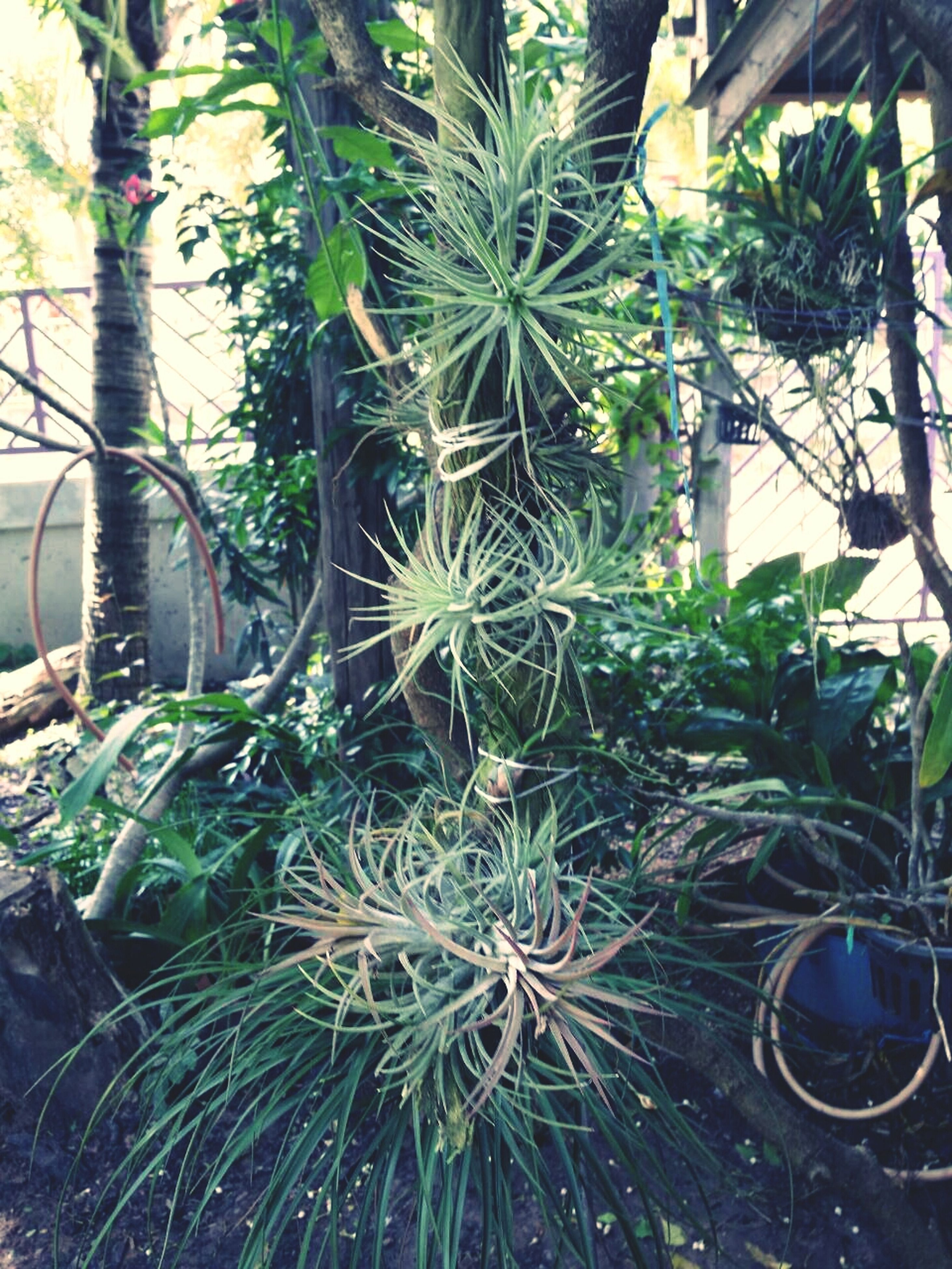 growth, plant, potted plant, leaf, palm tree, green color, tree, nature, cactus, growing, day, no people, front or back yard, built structure, outdoors, sunlight, high angle view, tree trunk, flower, beauty in nature