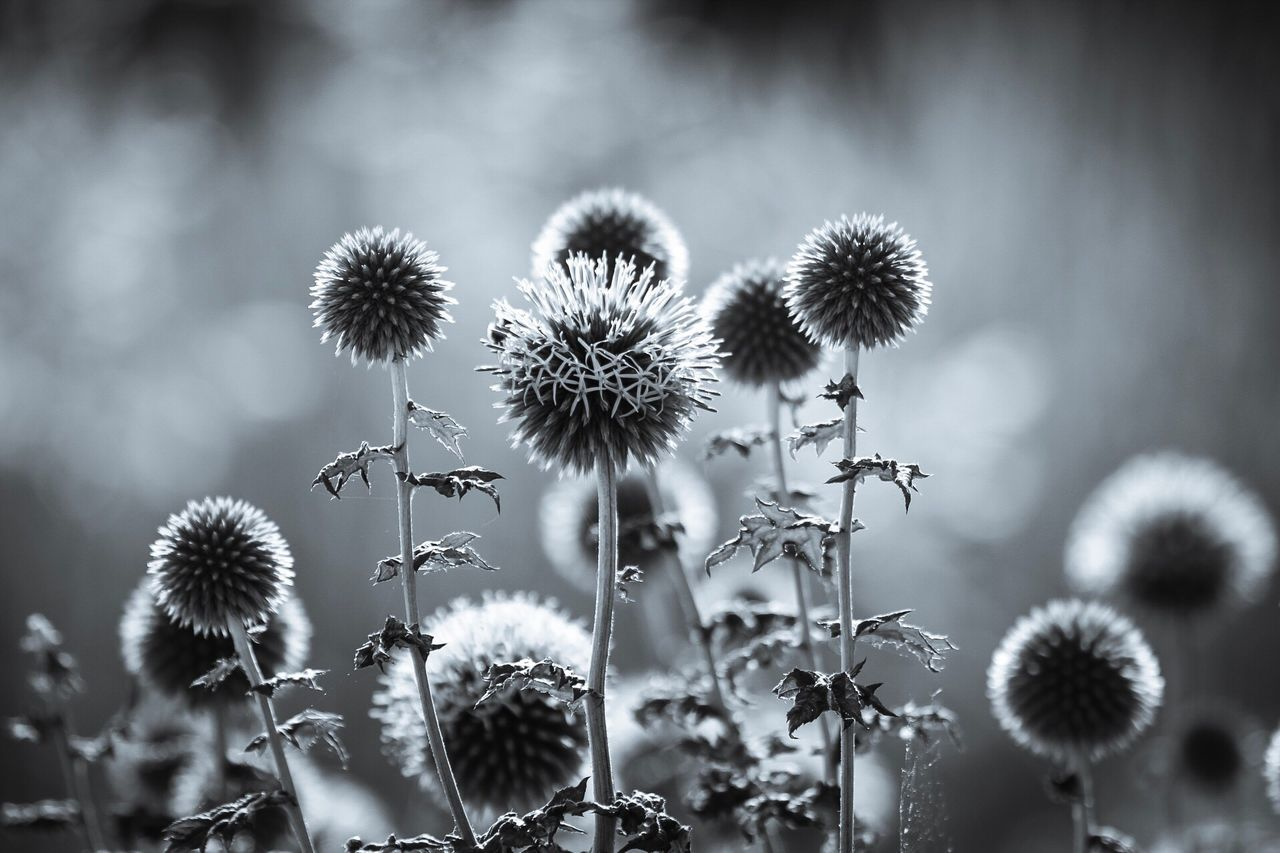 plant, no people, growth, focus on foreground, nature, close-up, day, outdoors, fragility, beauty in nature, flower, flower head