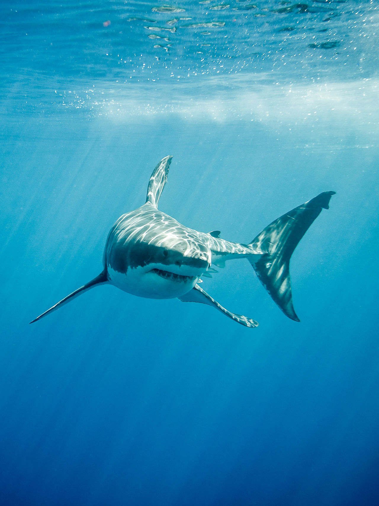 Beautiful stock photos of hai,  Adventure,  Animal Themes,  Animals In The Wild,  Danger