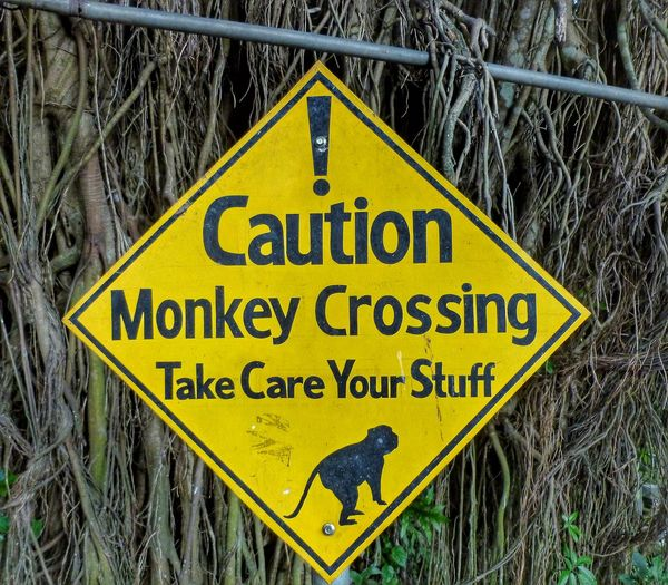 Ubud monkey forest sanctuary, Bali- watch your stuff!!! Caution Sign Close-up Communication Front View Guidance INDONESIA Information Information Sign Monkey Crossing Monkey Forest Monkey Image Monkey Sanctury Non-western Script Road Sign Sign Street Sign Symbol Symmetry Text Tree Background Ubud, Bali Warning Sign Western Script Yellow Sign