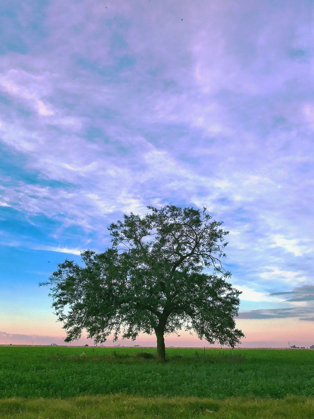 Tree Field Landscape Nature Beauty In Nature Sky Lone Isolated Scenics Growth Outdoors No People Grass Day The Great Outdoors - 2017 EyeEm Awards