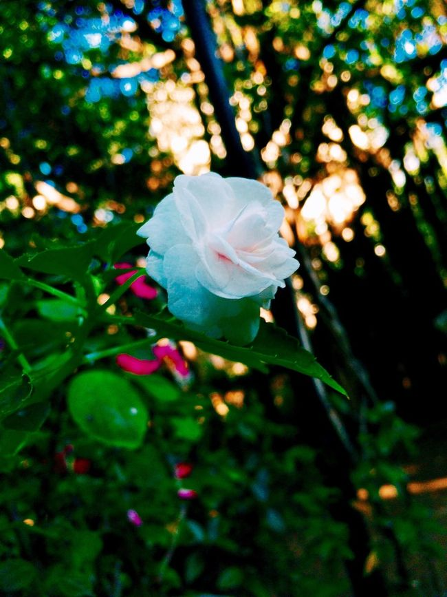 Beauty is everywhere ☀️ Flowers Flowerporn Garden Nature
