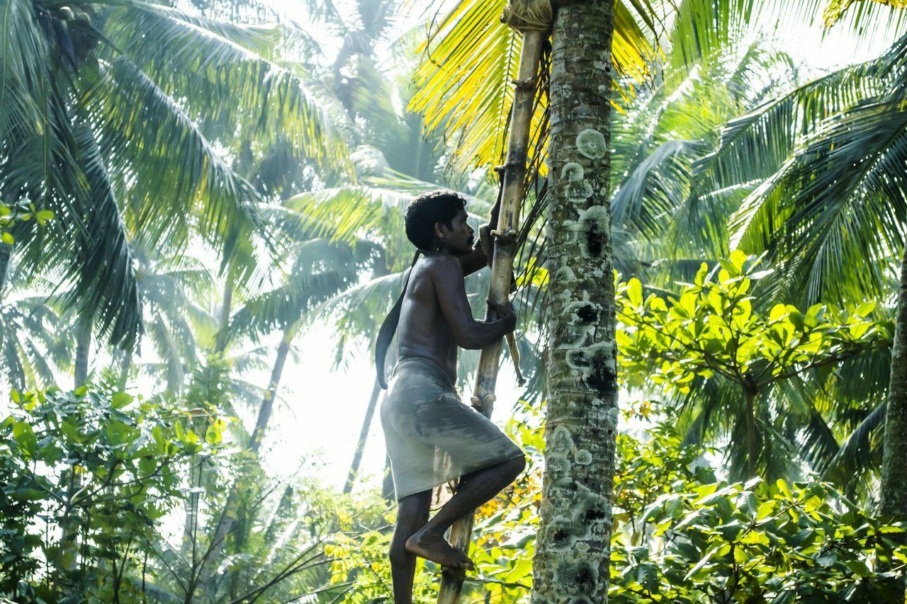 Beautiful stock photos of guten morgen, tree, growth, nature, lifestyles