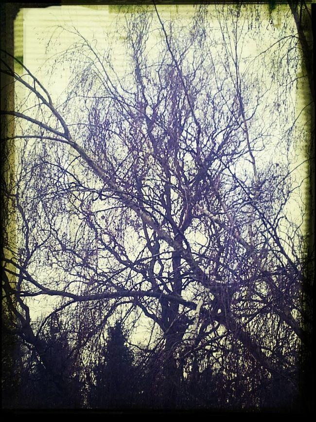 Winterstimmung Ohne Blätter Astwerk
